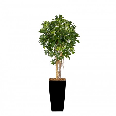 Kunstplant Schefflera Umbrella Arrangement