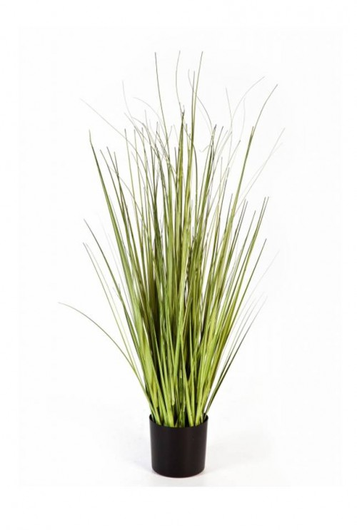 Variegated Carex Grass