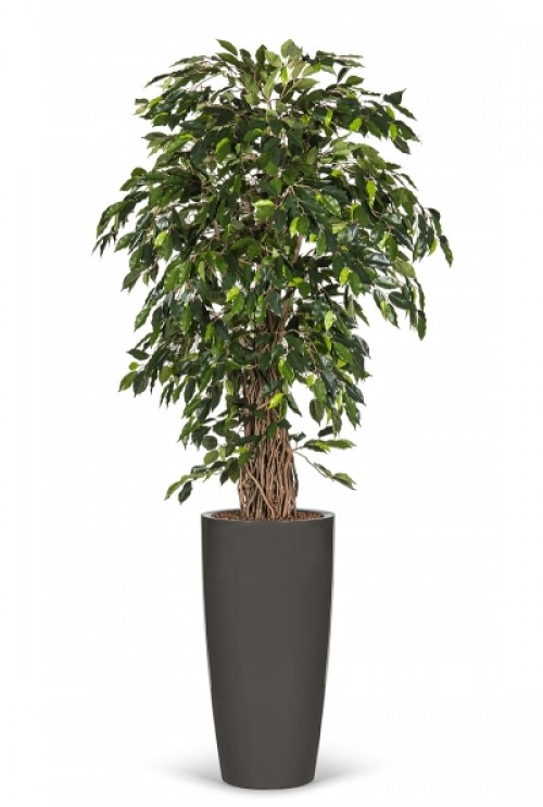 Kunstboom Ficus Tropical Liana