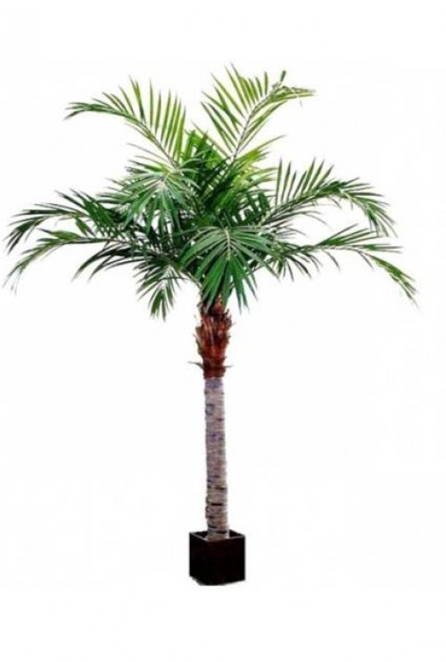 Kunstpalm_Majesty_Palm_Giant_350cm